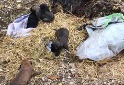 5 yavru köpek, ölü annelerinin başucunda çuval içinde bulundu