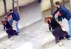 Gaziantep'te eşini sokak ortasında döven kişi tahliye edildi