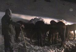 Kar nedeniyle yaylada mahsur kalan at sürüsü kurtarıldı