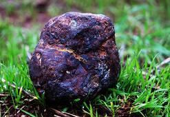 Odun toplarken buldu, fotoğrafını çekip bilim insanlarına attı