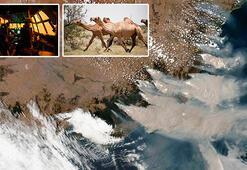 Skandal karar Avustralyada deve katliamına atlar da dahil edildi