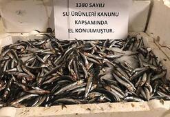 53 ton balığa el konuldu