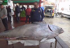Sardalya avlarken, 450 kiloluk orkinos yakaladılar