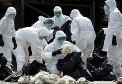 Macaristanda kuş gribi alarmı 53 bin hindi itlaf edildi