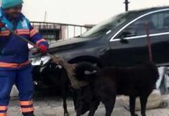 Temizlik işçisi sokak köpeklerine süpürgeyle masaj yaptı