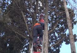 Silivride ağaçta asılı kalan kuşu itfaiye kurtardı