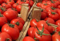 Batı Akdenizin ihracat şampiyonu domates oldu