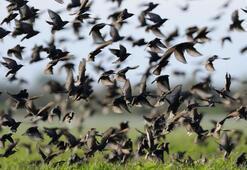 Önemli salgın uyarısı: Ölü kuş görürseniz sakın dokunmayın