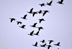 'Ölü kuşlara sakın dokunmayın'