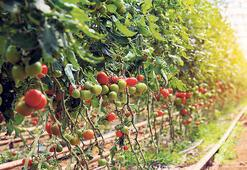 Tarım ve gıdaya kayıt dışı takibi