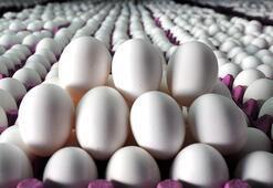 Yumurta üreticilerinin kuş gribi sevinci