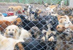 Hayvanlara karşı suçlara hayvan polisi geliyor