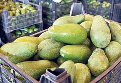 20 ülkeye avokado ihracatı