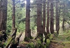Gören şaşkına dönüyor Gövdesinde 17 ağaç yetişiyor