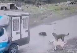 Önüne çıkan köpeği ezen belediye çalışanı işten çıkarıldı