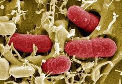 Corona virüsü nedir Coronavirüsü nasıl ve nereden bulaşır Korana virüsü tedavisi var mı