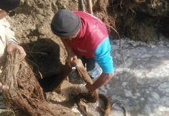 İçme suyu hattından tam 20 metrelik ağaç kökü çıktı