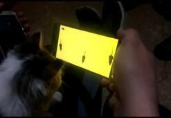 Kedinin cep telefonundan fare ile oyunu ilginç görüntüler oluşturdu