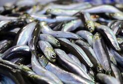 İstanbulda 2019da en çok tüketilen balık hamsi oldu