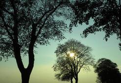 Ağaçların kendi büyüklüklerinin farkında olduğu keşfedildi