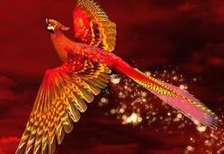 Zümrüdüanka ne demek Zümrüdüanka Kuşu efsanesi neyi anlatıyor
