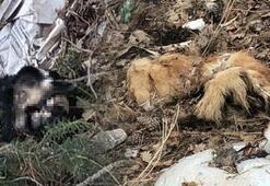 Uşakta çöplükte parçalanmış 20 köpek ölüsü bulundu