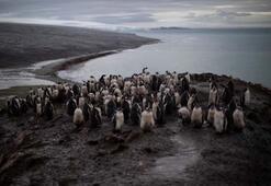 Güney Kutbu için alarm