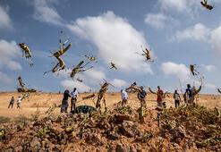 Doğu Afrika için çekirge felaketi uyarısı