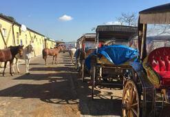 Adalarda atları satın alma işlemi başladı