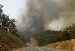 Son dakika haberi... Avustralyada orman yangınları altı ay sonra kontrol altında