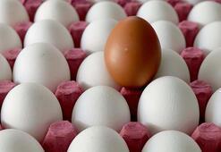 Irakın yumurta ithalatı yasağı Suriye ve Kuveyte ihracatta rekor getirdi