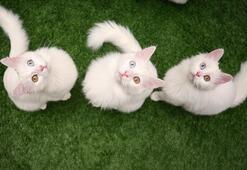 Dünya Kediler Günü nedir Kediler günü ne zaman kutlanıyor