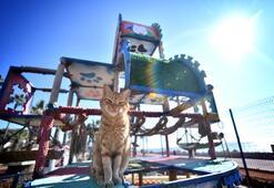 Mersinde Dünya Kediler Günü Miyav Parkta kutlandı