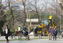 Gezi Parkına 150 yeni ağaç dikiliyor
