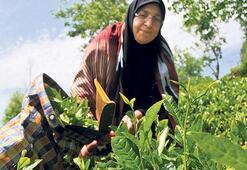 Çay üreticisi Rize ithalatta 1. oldu