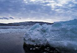 Sibiryada Buzul Çağından kalma kuşun kalıntısı bulundu