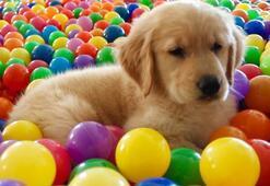 Evcil Hayvanları Akıllı Tasmalar Koruyacak