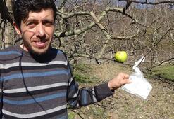 Hamile eşi için kopardığı elmanın parasını ağaca astı