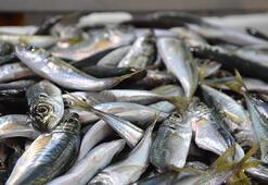 Karadeniz'de balık piyasasında durgunluk