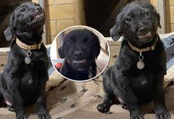 Gülümseyen köpek interneti kırıp geçirdi