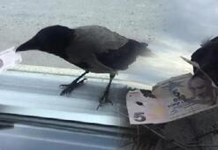 O karga yine görüntülendi Bu kez 5 lira ile uçtu