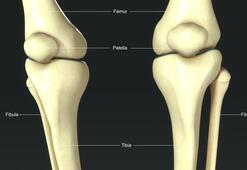 Fibula kemiği nerede bulunur Fibula kemiğinin bileşenleri nelerdir