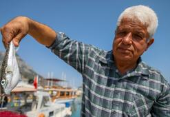 Balon balığıyla mücadelede, Kuyruğunu getir 5 lira al projesi balıkçıları sevindirdi