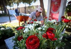 Çanakkale kahramanlarının mezarları 11 bin şakayıkla kırmızı beyaza büründü