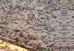 Karınca istilası nedir Karınca istilası nerede