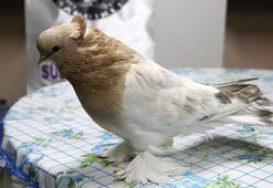 2 çift güvercin 12 bin liraya satıldı
