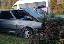 Bursada kaza Ağaçlara çarparak durdu