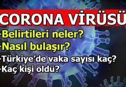 Corona virüsü belirtileri - Nasıl bulaşır Türkiyede corona virüsü kaç kişiye, hangi ilde bulaştı