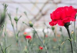 Corona virüsün çiçek sektörüne etkisi 30 milyon dolar