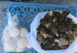 Kilosu 120 lira olan kuzugöbeği, bağışıklık sistemi için birebir